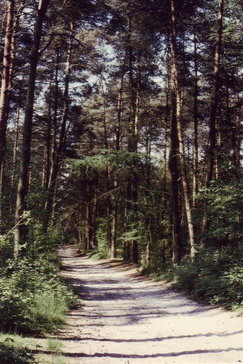 20080805 chemin du plagniau © michel wautot