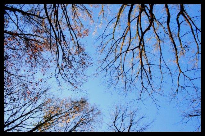 bois de rixensart © florie blaise (3)
