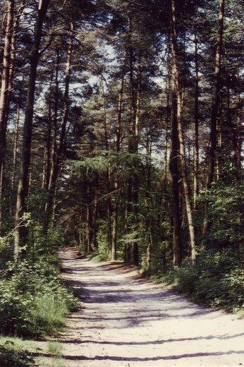Chemin du Plagniau © Michel Wautot