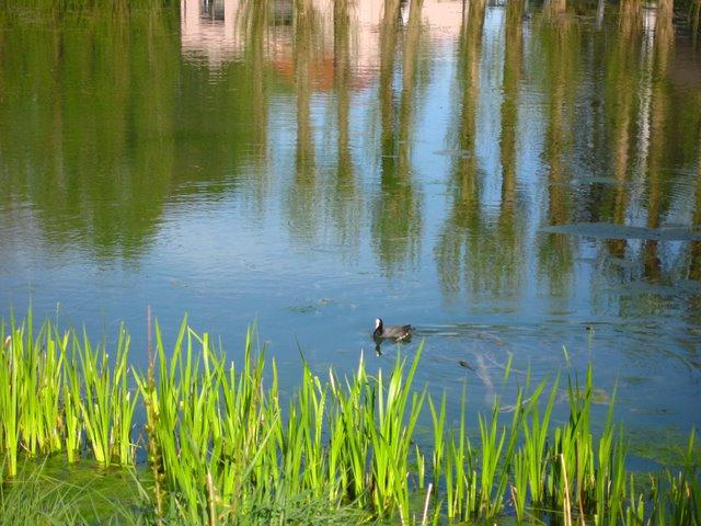 lac de genval abords or © josette verbois-thonnard