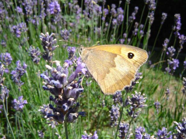 dans mon jardin © véronique wasnaire (4)