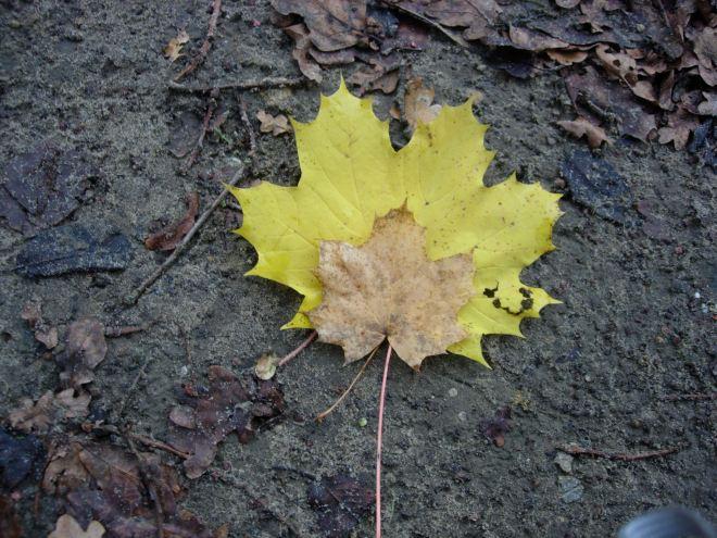 automne à rosières © elèves de l'ecole communale de rosières
