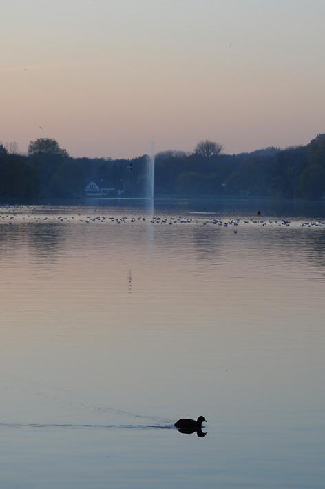 lac de genval © jonathan godin (3)