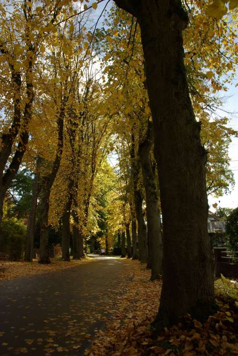 Avenue de Montalembert © Eric de Séjournet