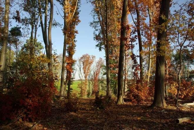 20111031 Bois du Bosquet à Rosières © Eric de Séjournet-54