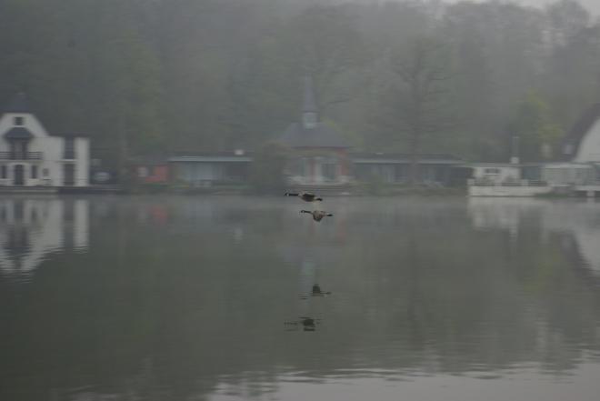 Bernaches du Canada (Lac de Genva)l 20090413 © Eric de Séjournet