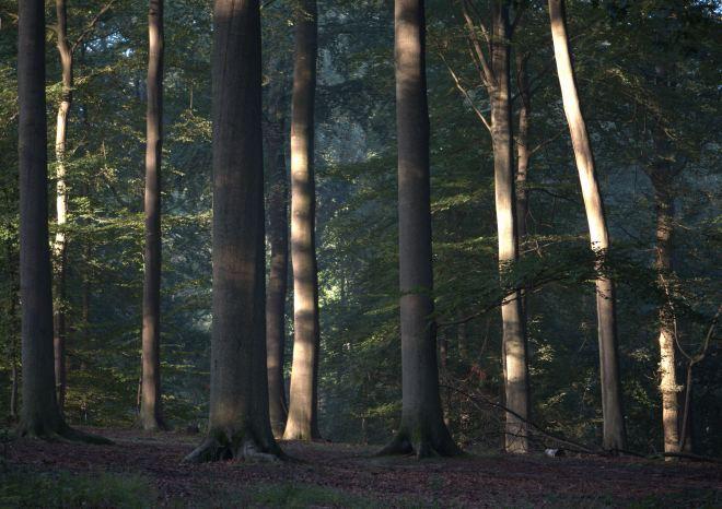 bois de rixensart 2011 © gilbert nauwelaers