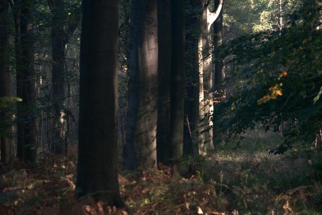 bois de rixensart d © gilbert nauwelaers