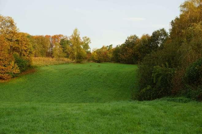 Bois du Bosquet à Rosières 10.2014 © Eric de Séjournet