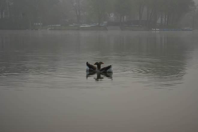 Lac de Genval 20090413 © Eric de Séjournet (9)