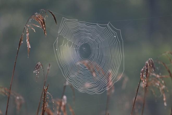 toile d'araignée © gilbert nauwelaers