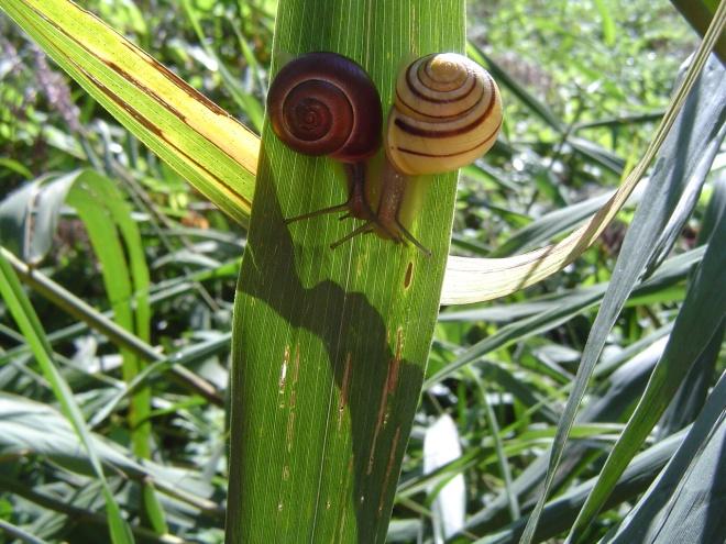 escargot © gilbert nauwelaers