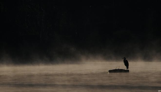 Lac de Genval 10.2013 © Gilbert Nauwelaers - 10