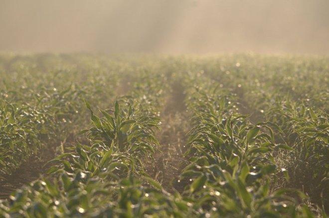 vallée de la lasne (maïs) © gilbert nauwelaers