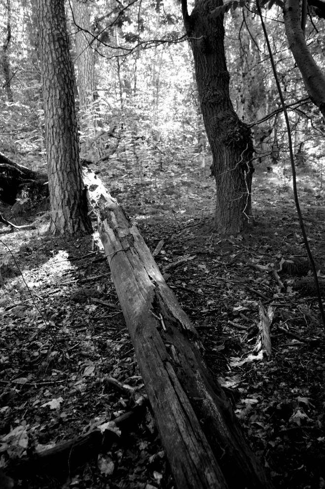 Bois de Rixensart B 8.2014 © Monique D'haeyere - 1