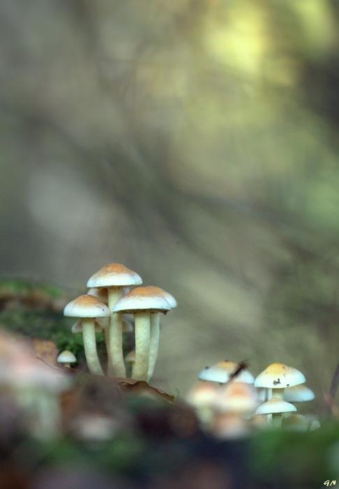Bois de Rixensart champignons 11.2014 © Gilbert Nauwelaers - 7