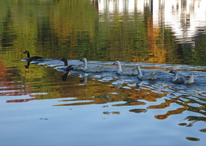 lac de genval automne 2008 © berna de wilde (11)