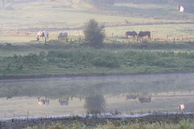 prairie du carpu © françoise leleux (2)
