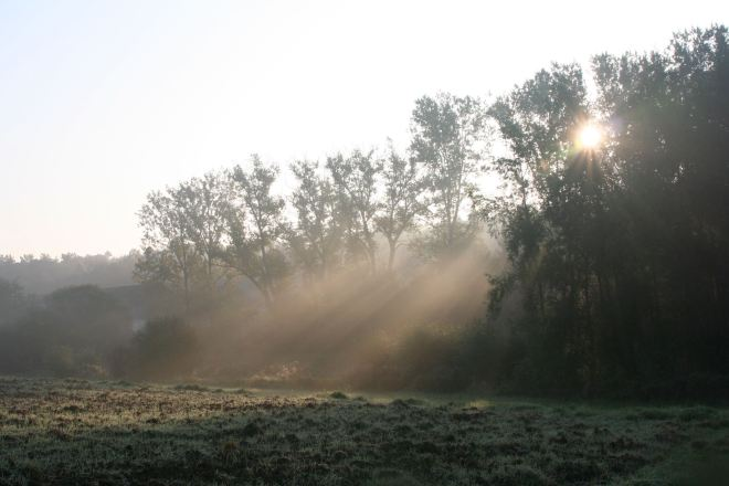 prairie du carpu © françoise leleux