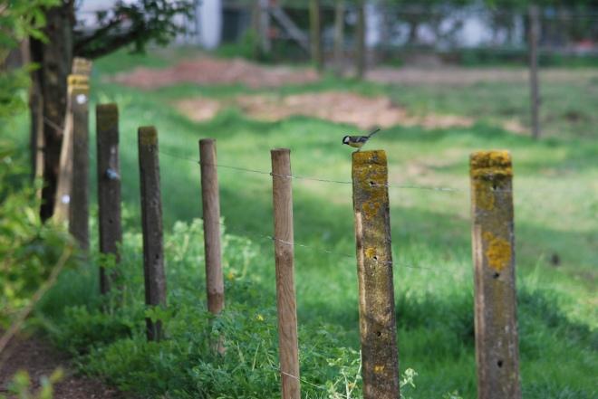sentier du carpu mésange © gilbert nauwelaers