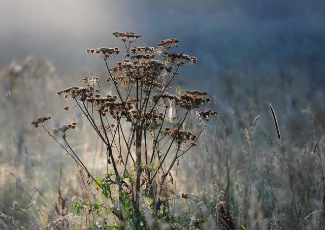 Carpu 9.2012 © Gilbert Nauwelaers-014