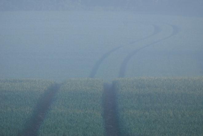 champs du carpu © gilbert nauwelaers