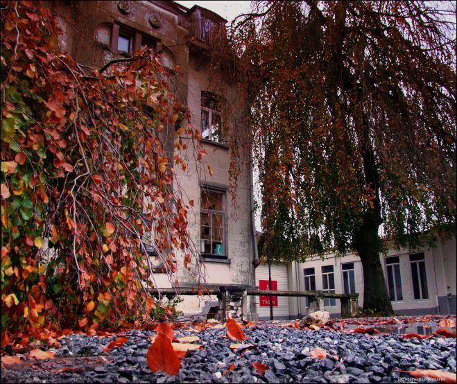 villa beau site © dominique mouvet