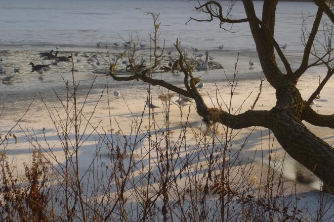 20091227 lac de genval © magguy van goethem