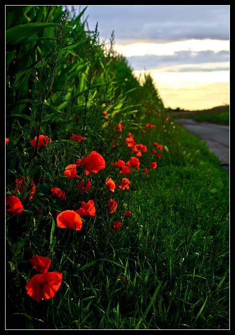 avenue de villefranche 20090723 © laurent gilson