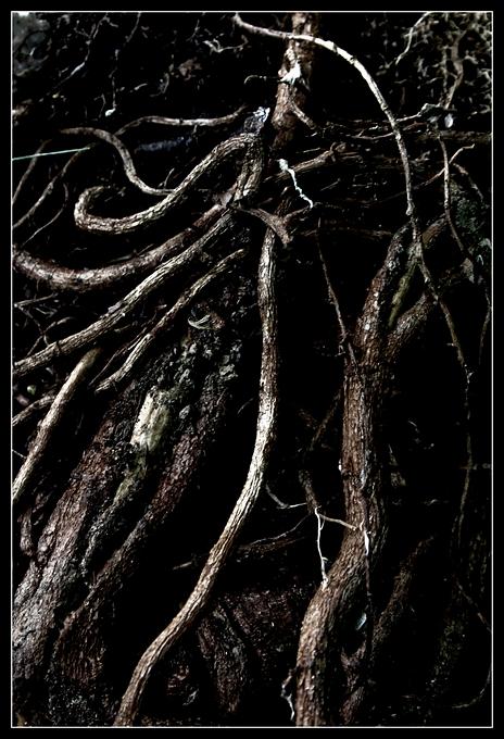 bois de rixensart 20090622 © laurent gilson