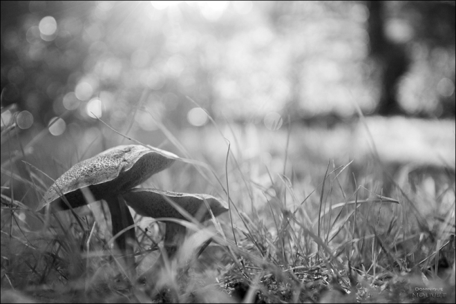 6 prairies à rosières © dominique mouvet (1)