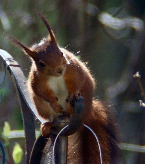 ecureuil © marie goeyens