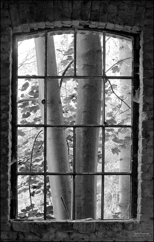 plagniau © dominique mouvet (5)