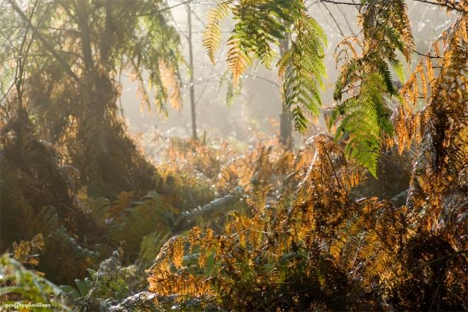1228 bois de rixensart © geoffrey bailleux or20081219
