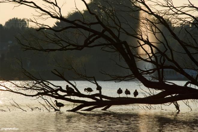 lac de genval © geoffrey bailleux
