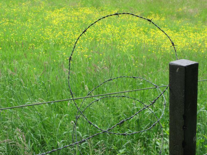 chemin du vieux marchal 20080524 © berna de wilde