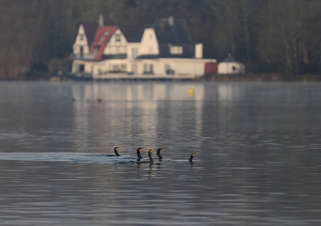 lac de genval 11.2012 © gilbert nauwelaers