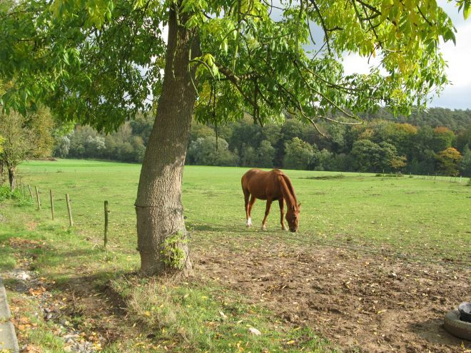 sentier du plagniau 20091010 © berna de wilde