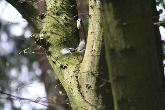 mésanges au parc communal © nathalie debroux