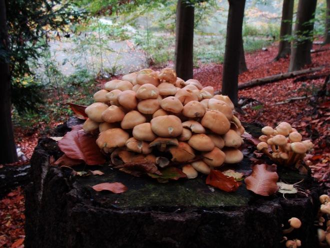 10 champignons © fabian geets