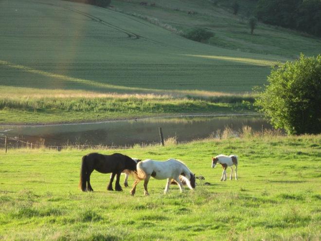 vallée de la lasne © laure lorent