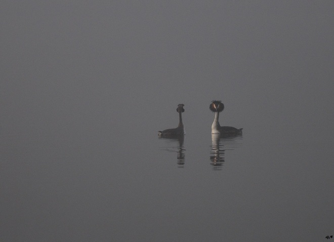 lac de genval 3.2013 © gilbert nauwelaers-001