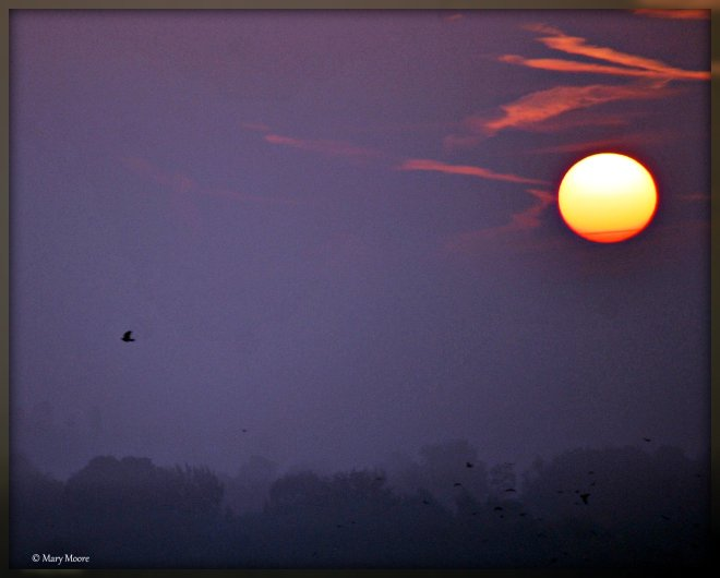 4 sunrise in rixensart © mary moore