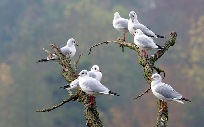 10 lac de genval © béatrice de wilde (1)