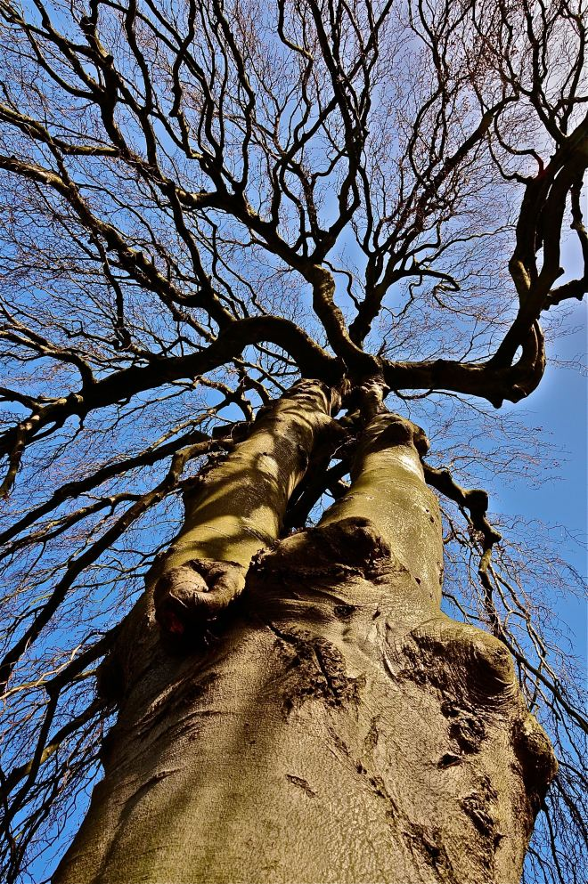arbre femelle (beau-site) 4.2011 © pierre gheux