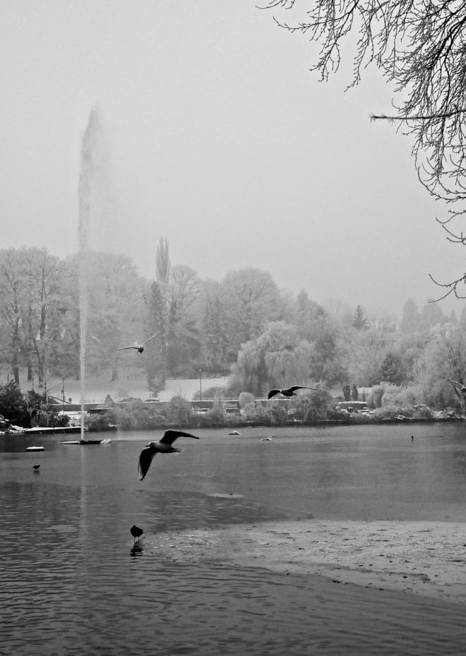 lac de genval c 1.2013 © pierre gheux-002