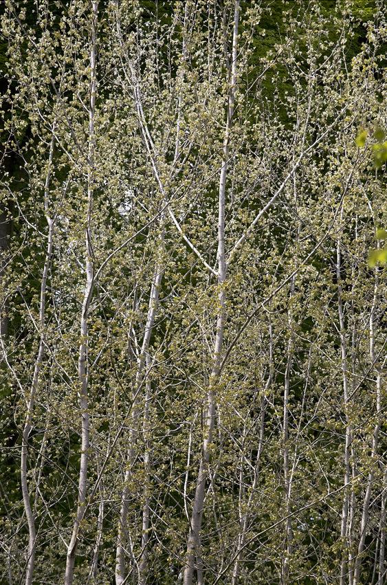 13 bois de rixensart © dominique mouvet