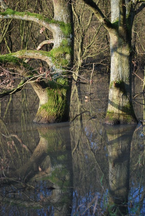 24 bois du beloi © gilbert nauwelaers