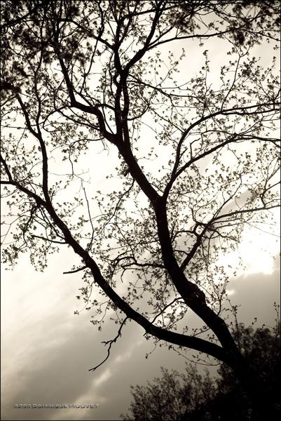 4 pré-maillard © dominique mouvet (1)