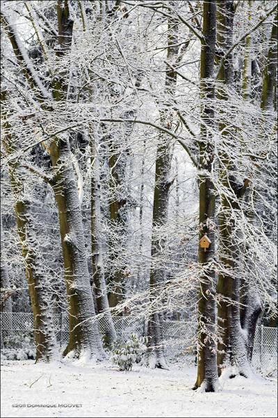 5 pré maillard © dominique mouvet 4348